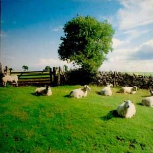 Listen to a 3.5 hour session by The KLF & The Orb